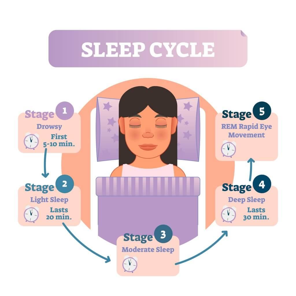 gráfica del ciclo del sueño (ritmos circadianos)
