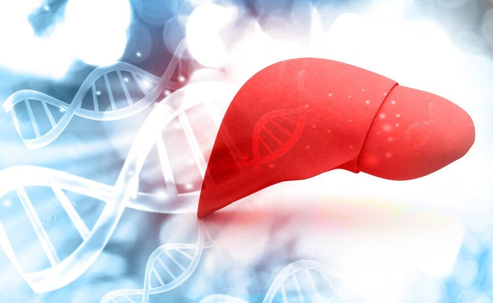 hígado metabolismo hepático