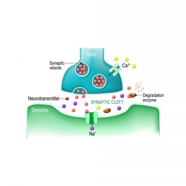 El papel de la serotonina en la depresión