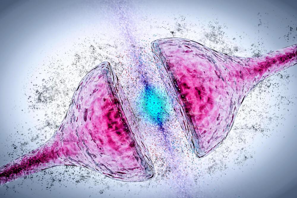 sinapsis neuronal neurona escitalopram
