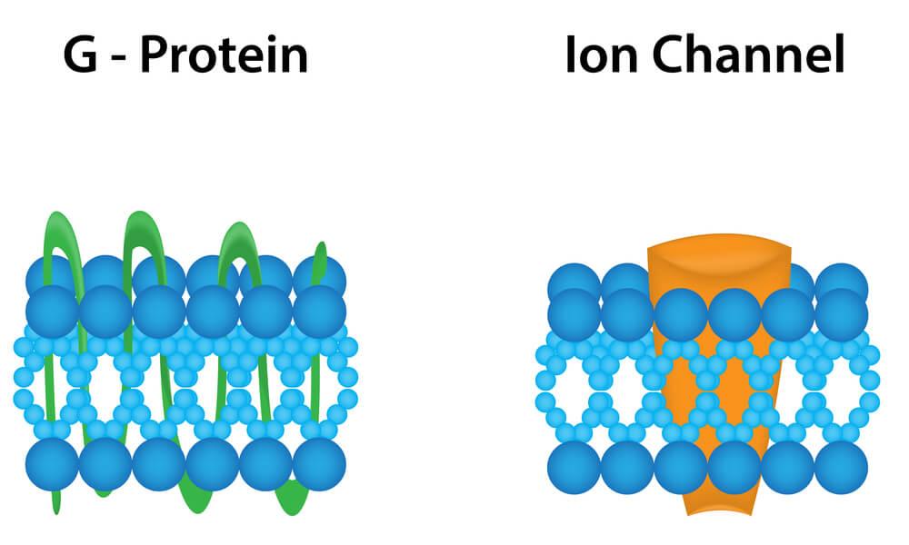 proteína G canal iónico