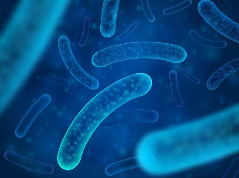 bacteria célula bacilo