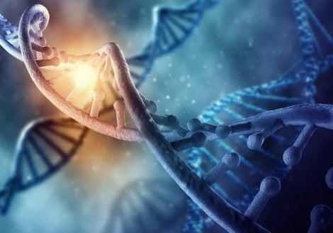 ADN material genético