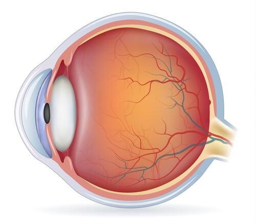 Estrutura do olho.