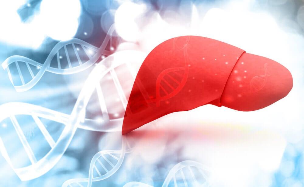 Hígado, metabolismo hepático