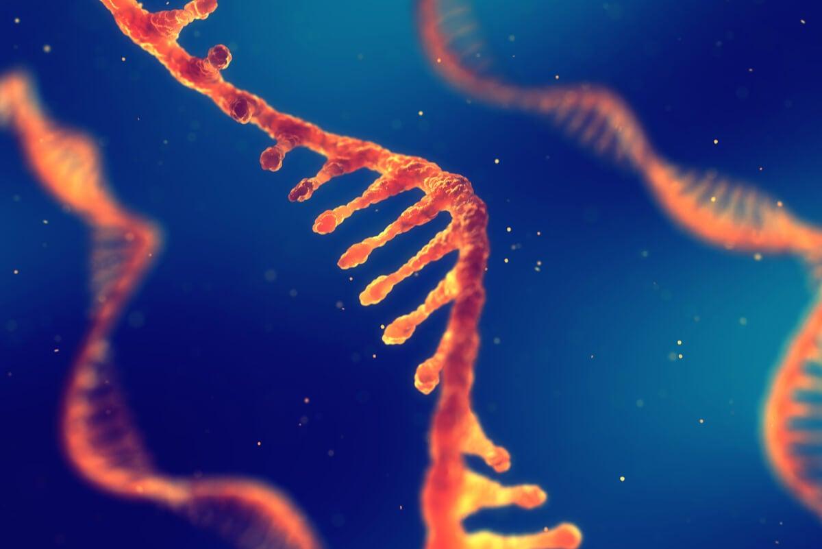 Cadena de ARN.