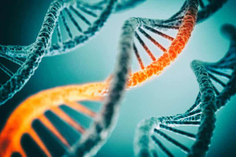 Biología molecular: ¿en qué consiste esta disciplina?