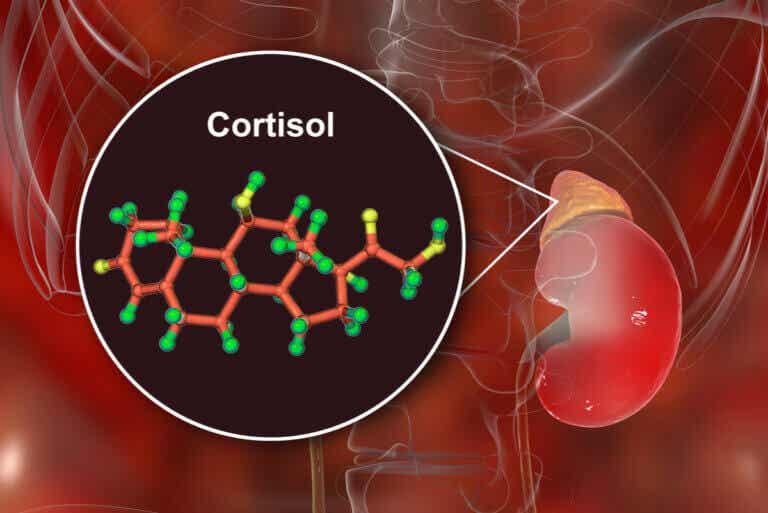 8 señales que indican altos niveles de cortisol