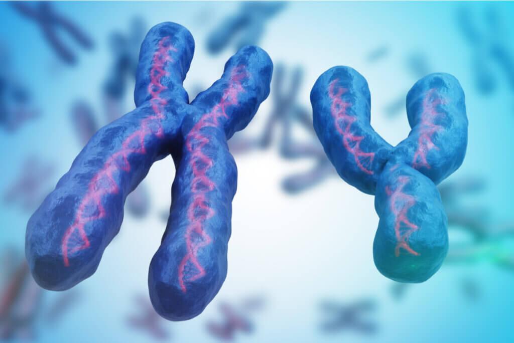 Cromosomas X e Y.