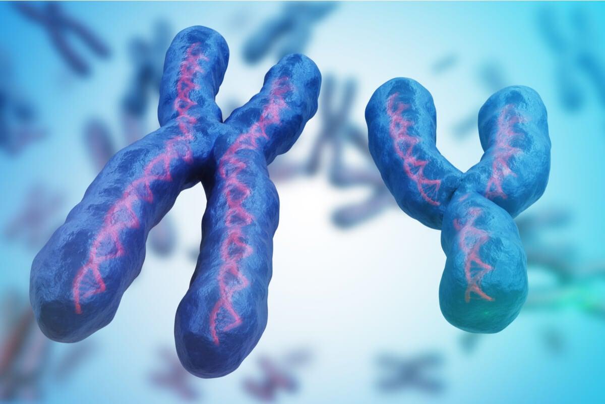 Cromosomas X e Y en el síndrome de Rett.