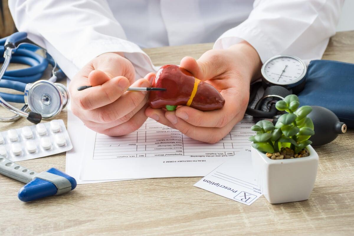 Médico muestra un hígado.