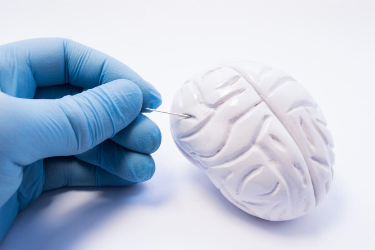 Anatomía del cerebro.
