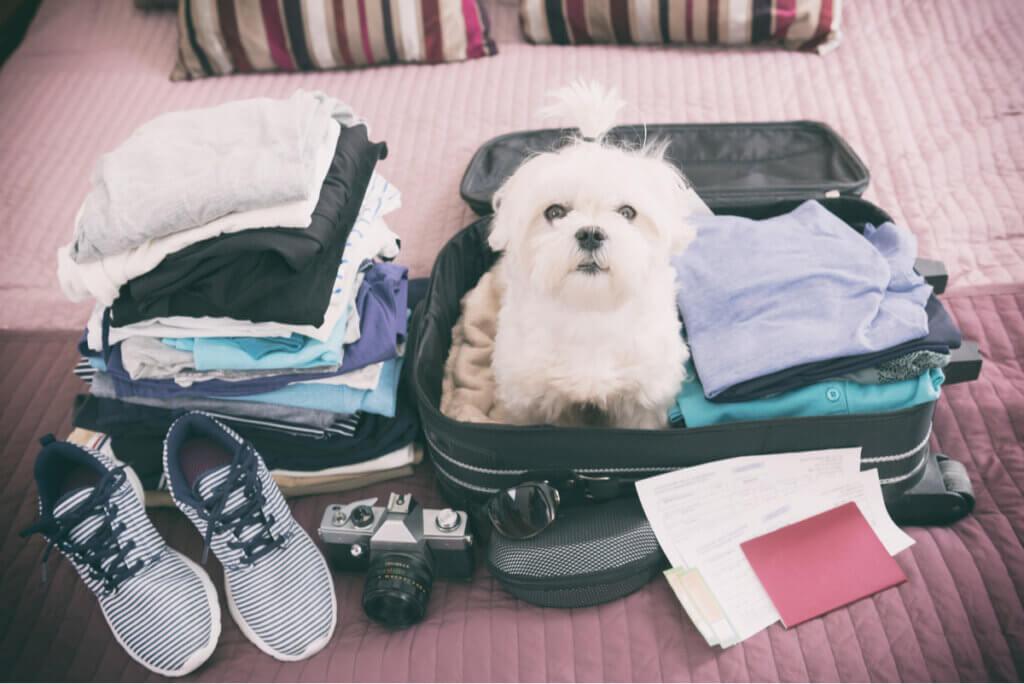Viajar con mascotas para despejar la mente.
