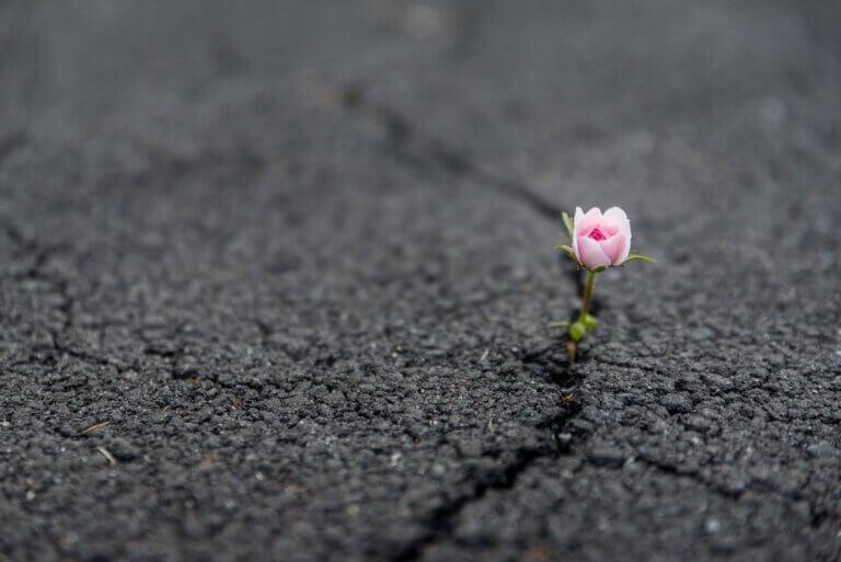 ¿Qué es la resiliencia y cómo fortalecerla?