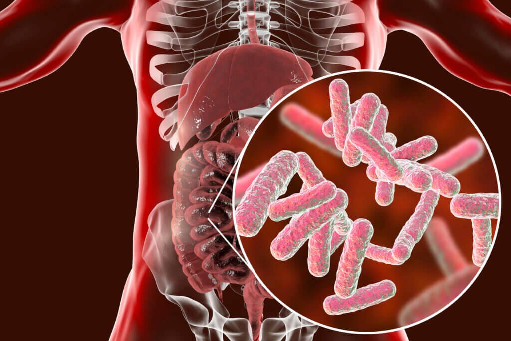 Microbiota intestinal y su papel en la salmonela.