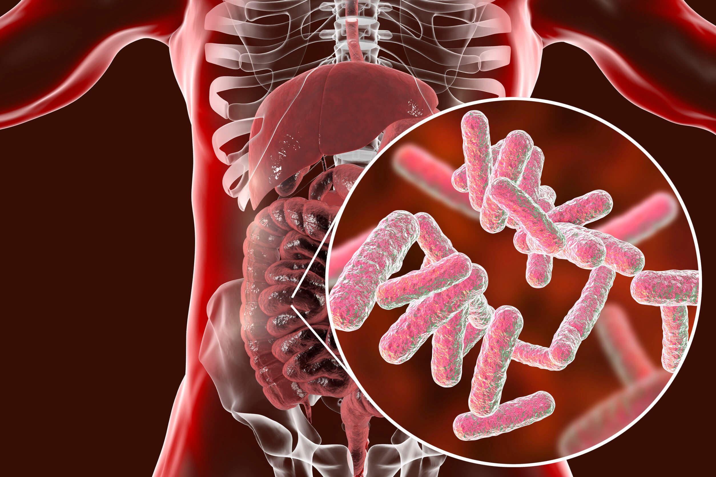 La vitamina b8 (biotina) puede ser producida por las bacterias que viven en el tracto digestivo.