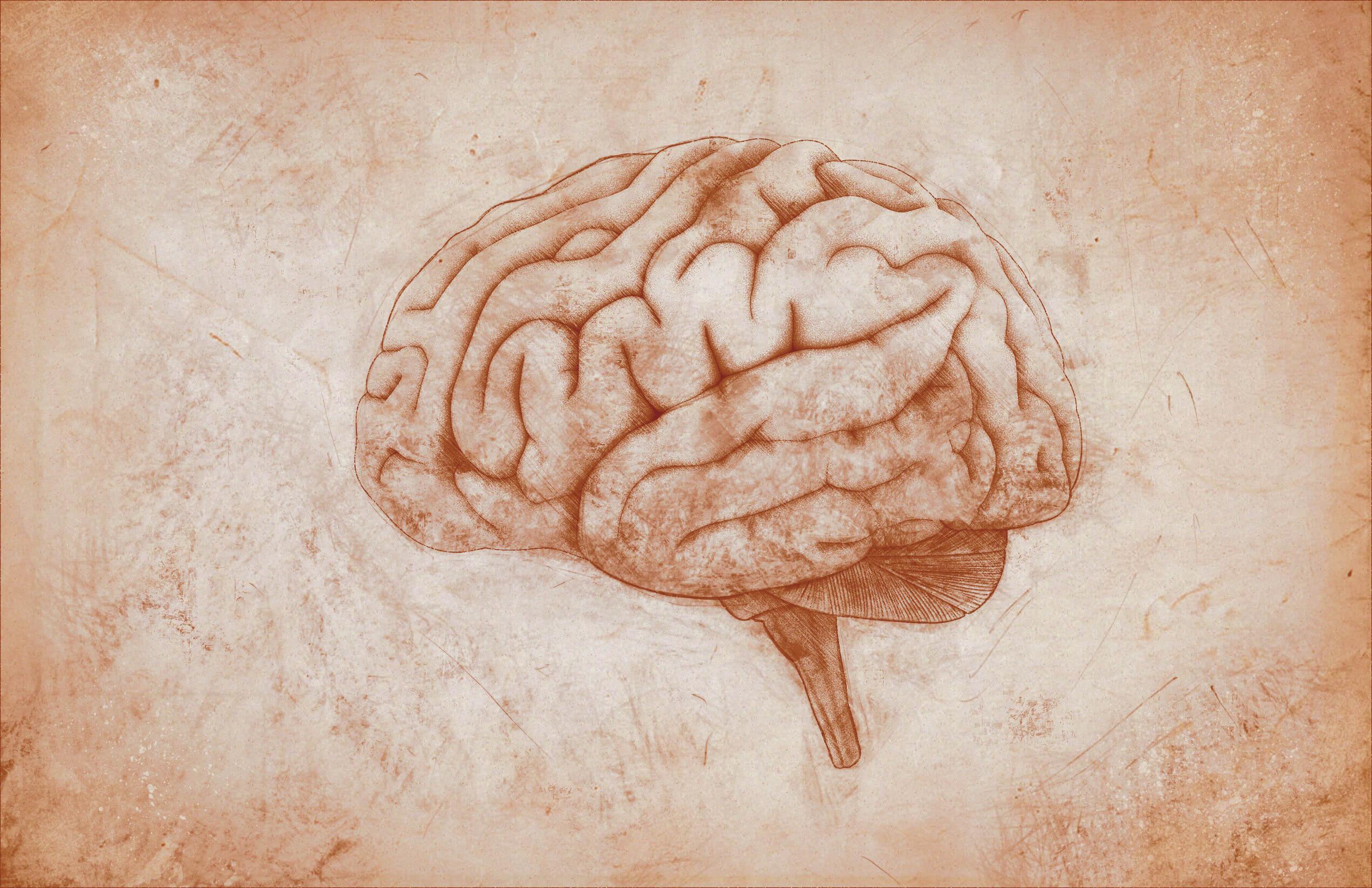 El síndrome amnésico y las lesiones cerebrales.