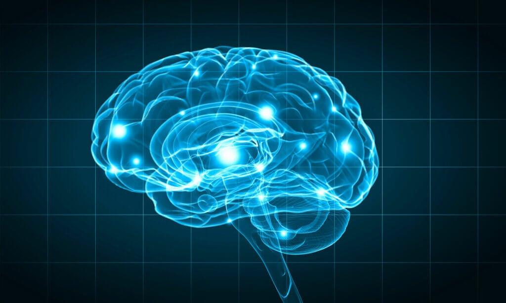 Actividad neuronal según centros de funcionamiento bioquímicos.