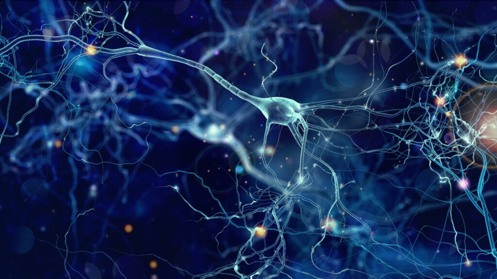 Neuronas donde actúa la gabapentina.