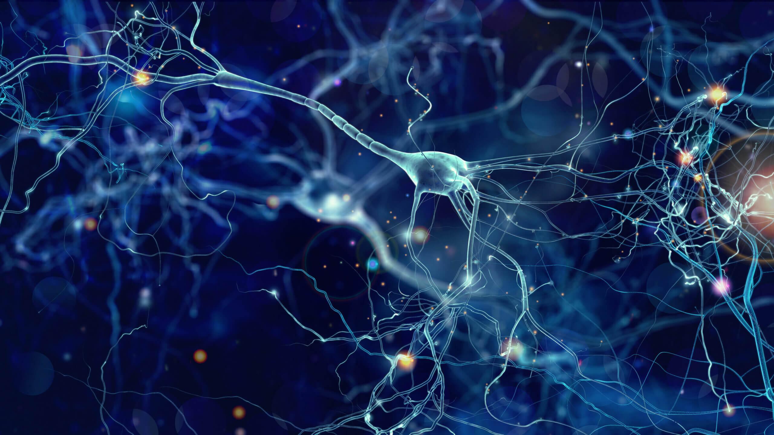 La neuróbica permite establecer nuevas conexiones neuronales.