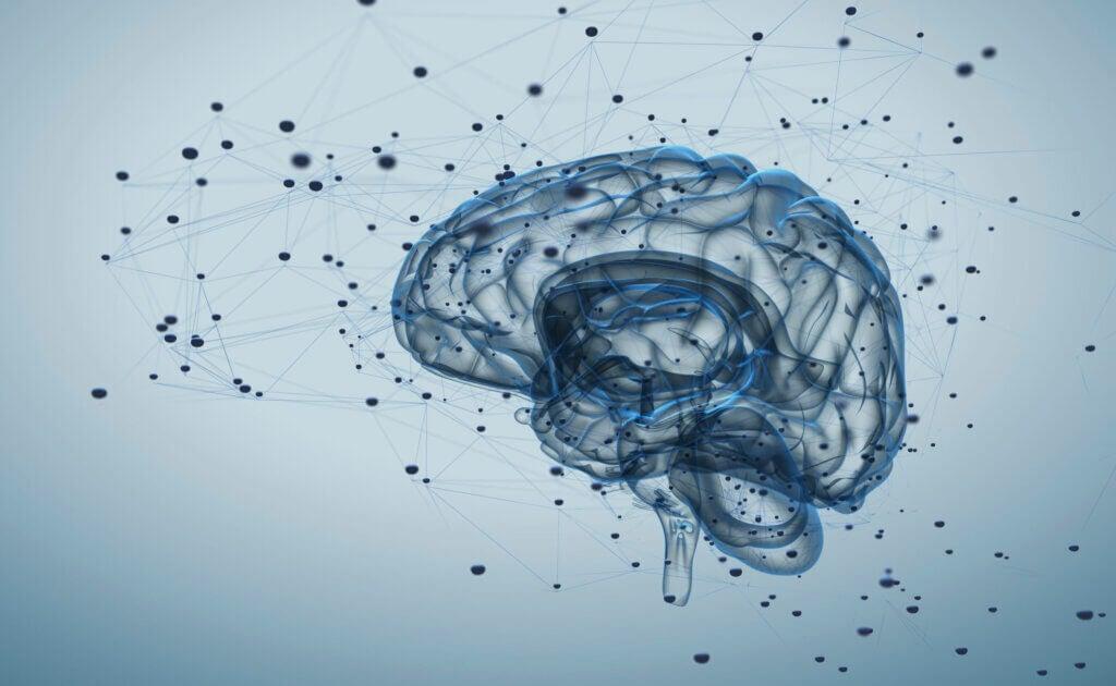 ¿Qué son los neuropéptidos?