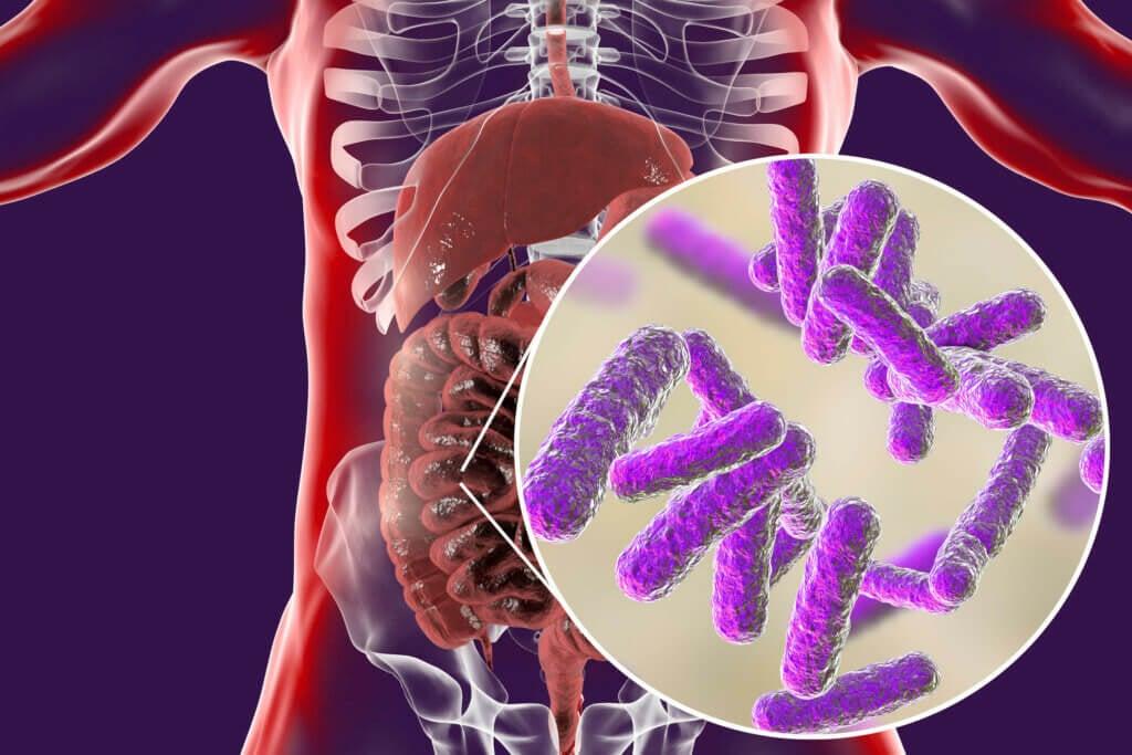 Microbiota intestinal.