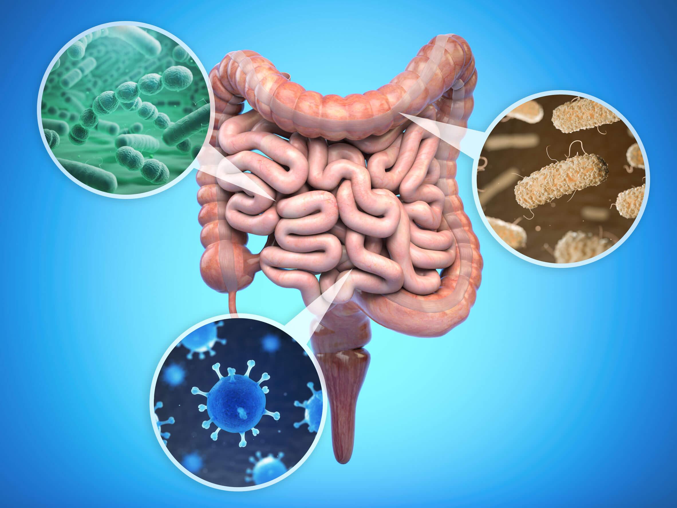 A acrilamida pode ser utilizada pela microbiota intestinal como substrato energético.