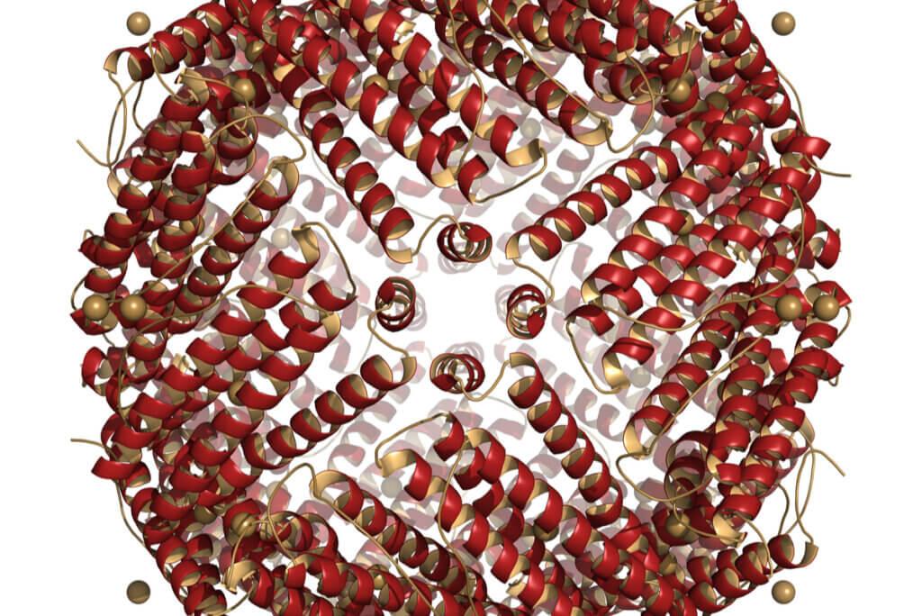 Molécula de ferritina.