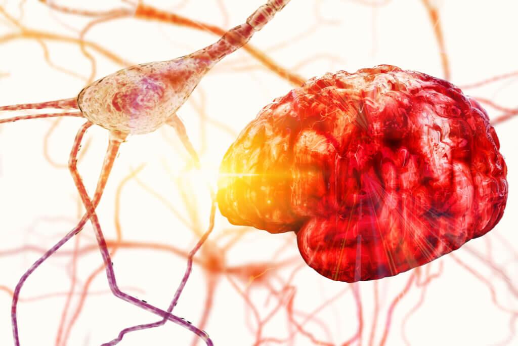 Cerebro regula la temperatura corporal.