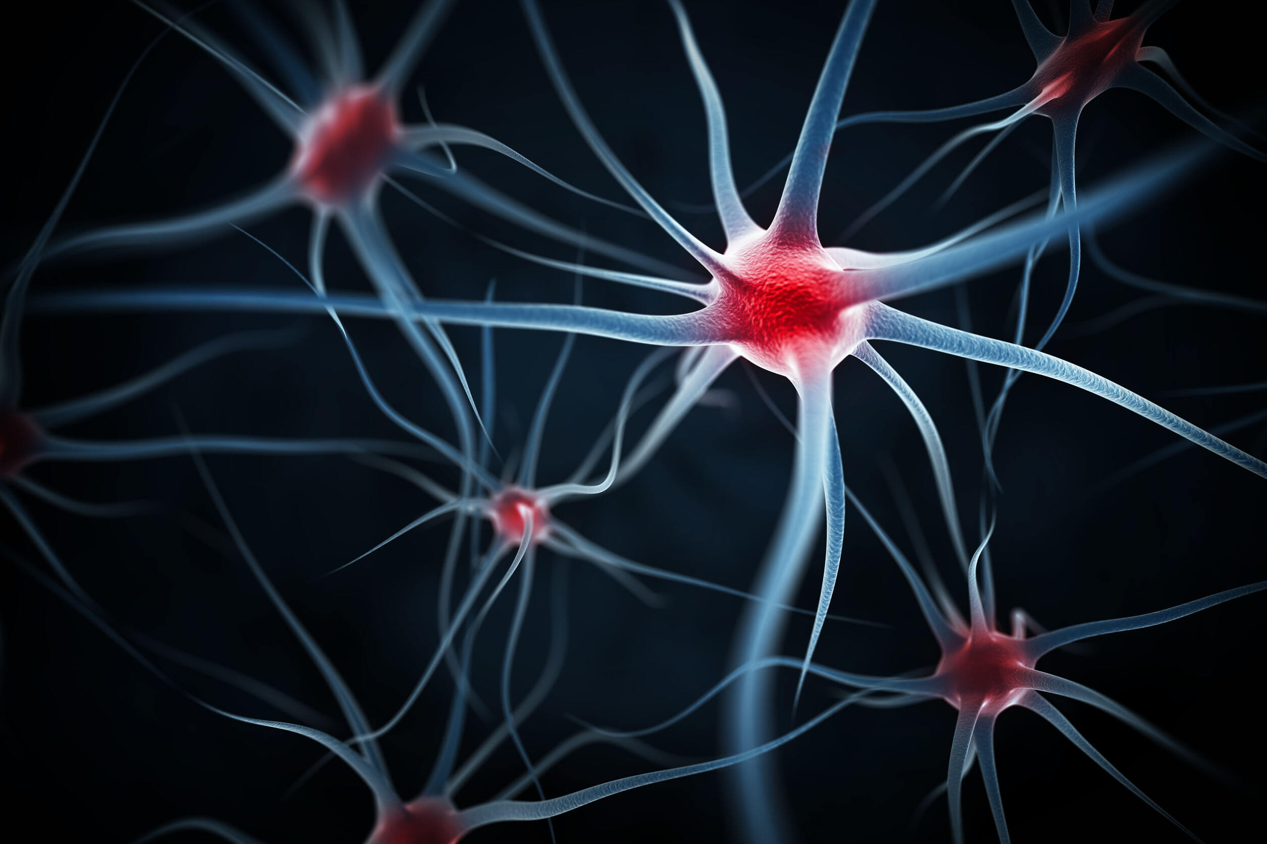 Neuroplasticity includes changes at various structural levels.