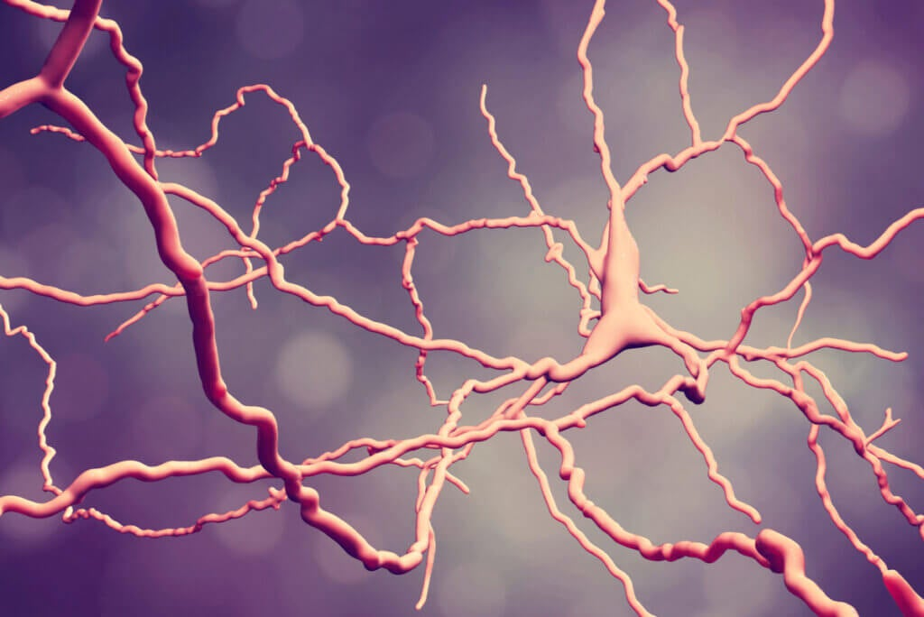 Neuronas en conexión por plasticidad neuronal.