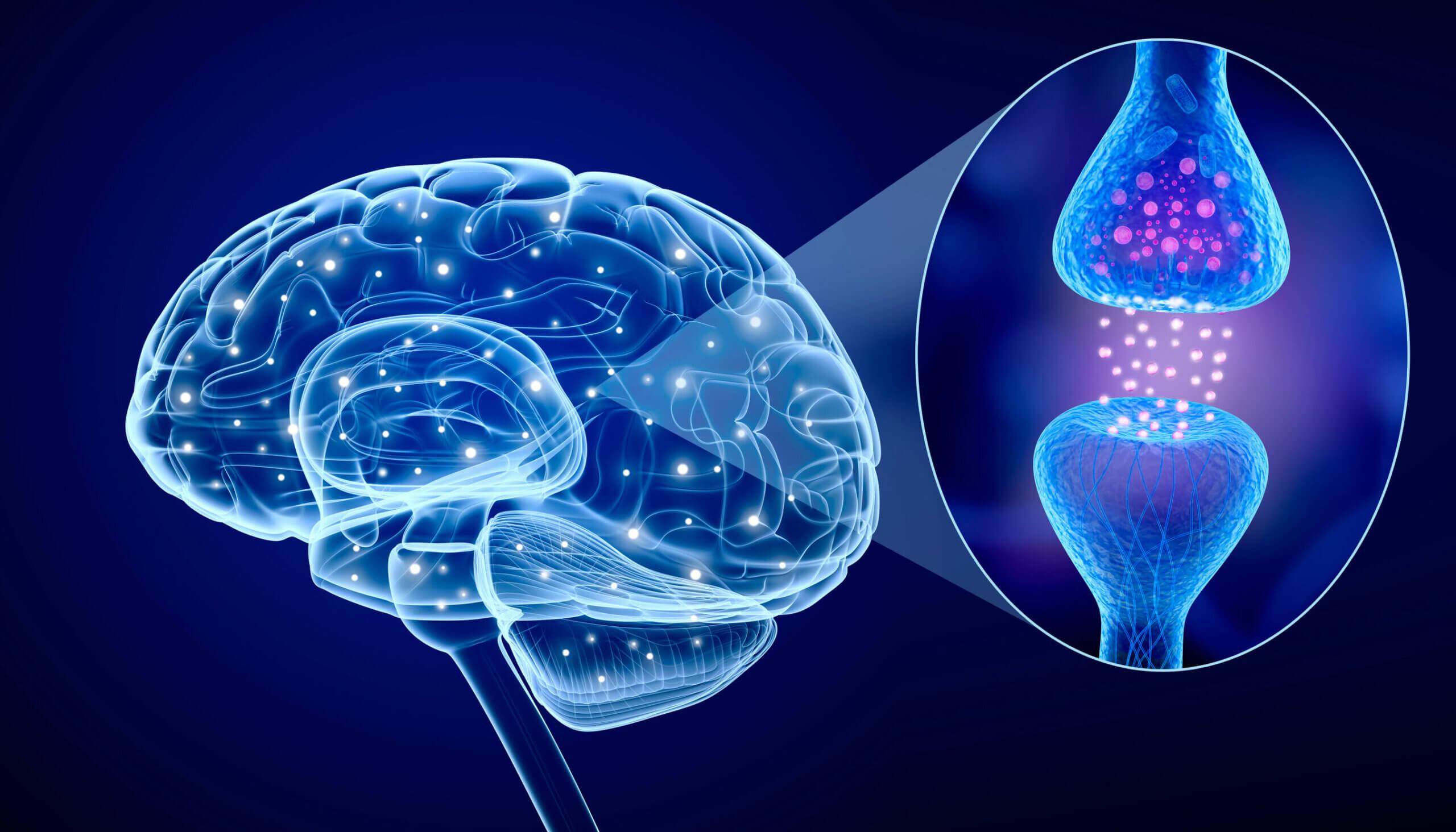 La ghrelina y su efecto en el sistema nervioso