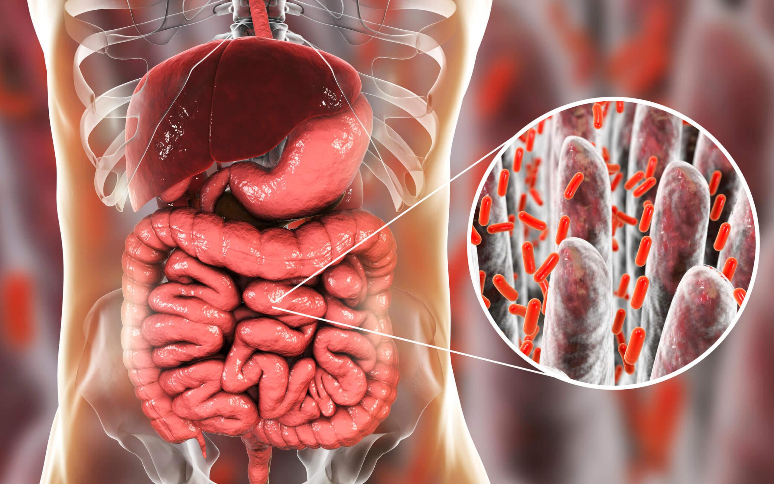 La microbiota y la salud mental están relacionados.