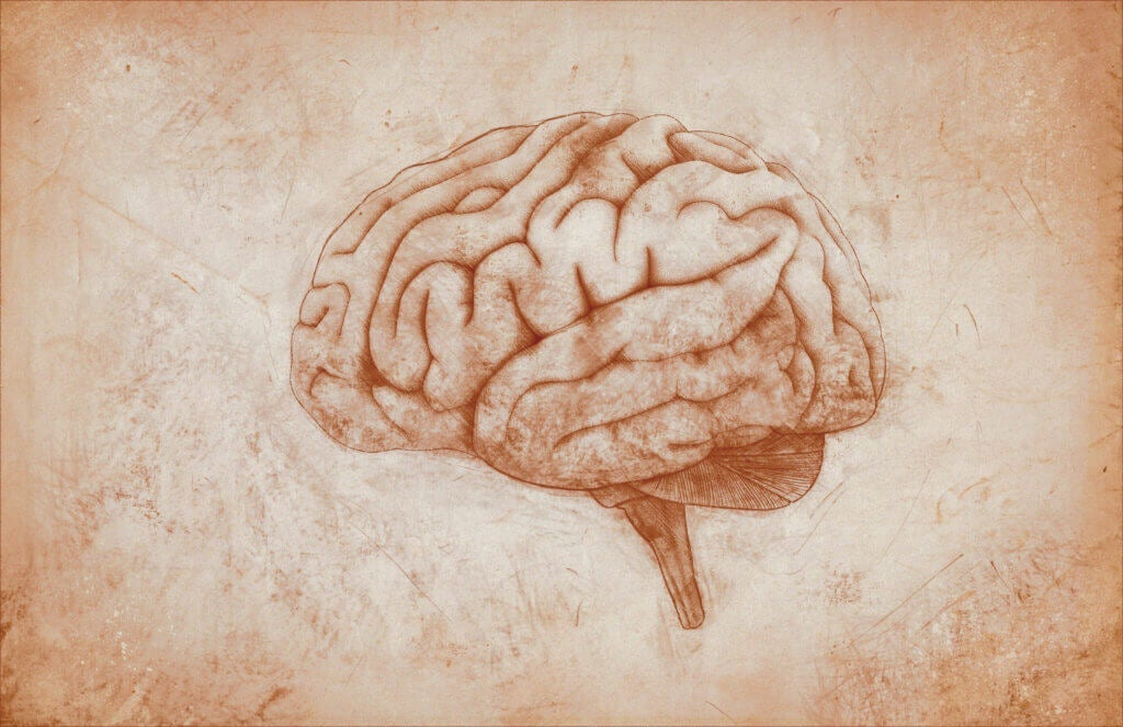 Meninges: Characteristics and Functions