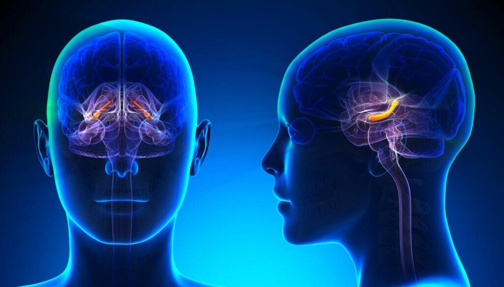 O que é o hipocampo e quais são as suas funções?