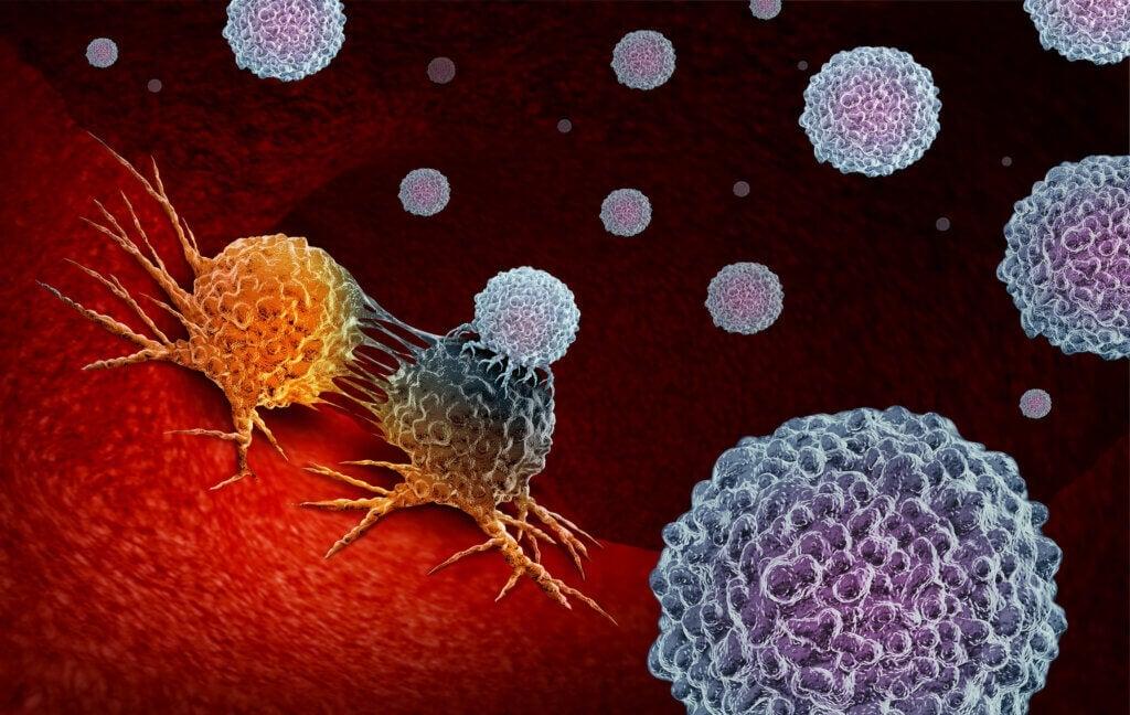 Système immunitaire: caractéristiques et fonctions