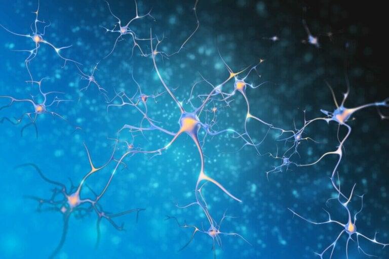 Qu'est-ce que la neuroplasticité?