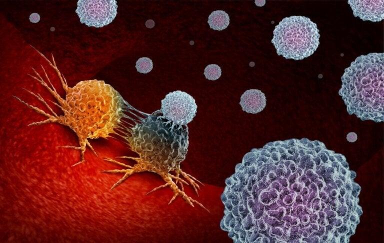 Dieta e sistema immunitario: cosa c'è da sapere