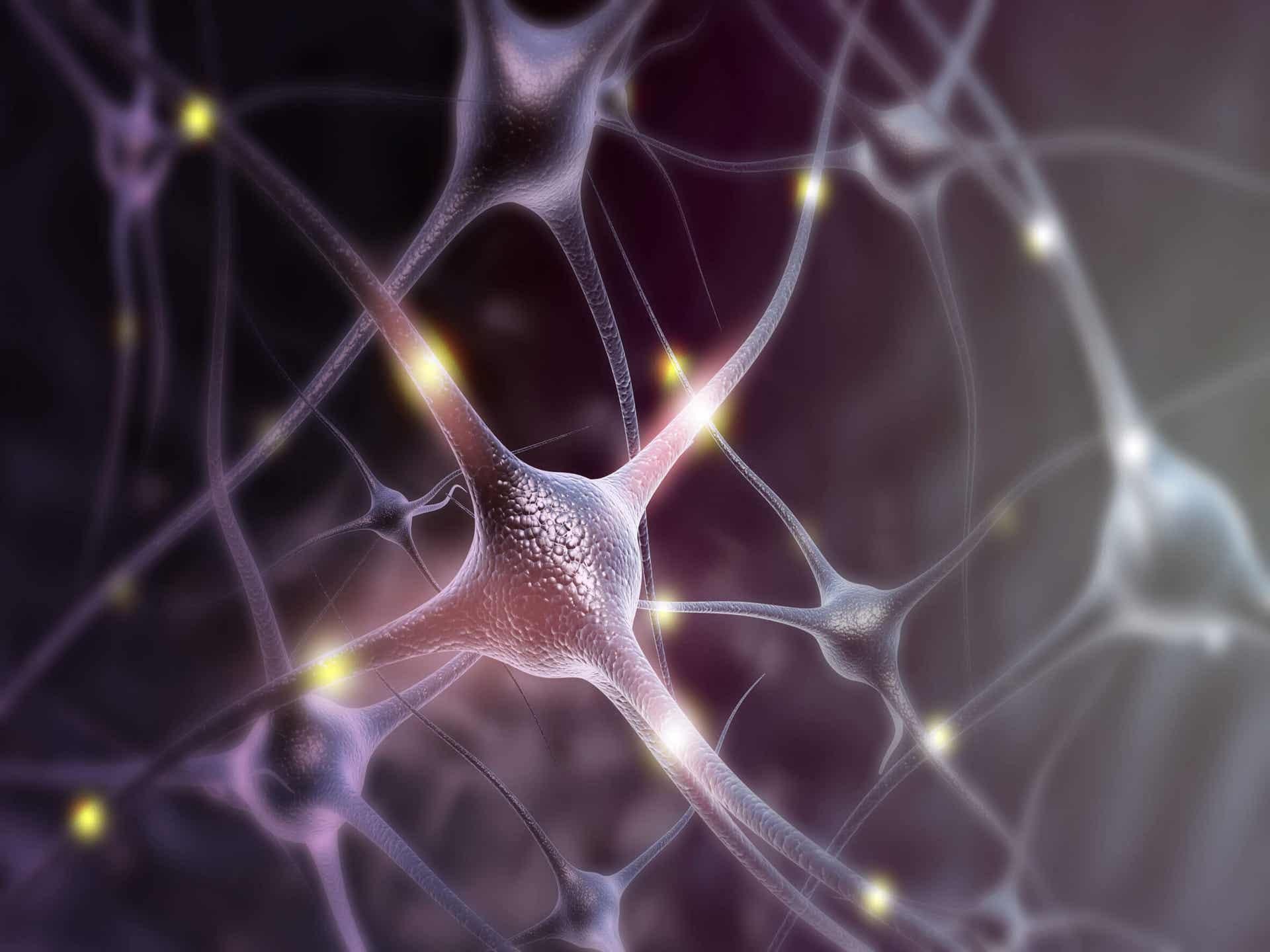 Origen de la prolactina