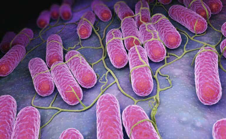 Microbiote: qu'est-ce que c'est et quelles sont ses fonctions?