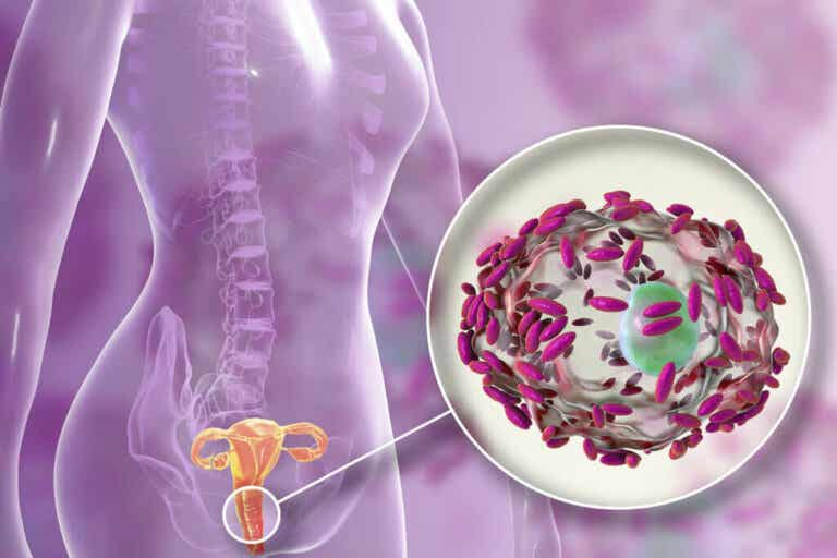 Flora vaginal: o que é, funções e como cuidar dela