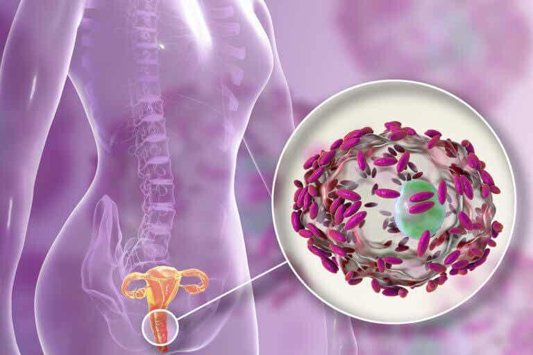 Flora vaginal: qué es, funciones y cómo cuidarla