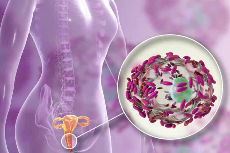 Flora vaginale: cos'è, a cosa serve e come prendersene cura