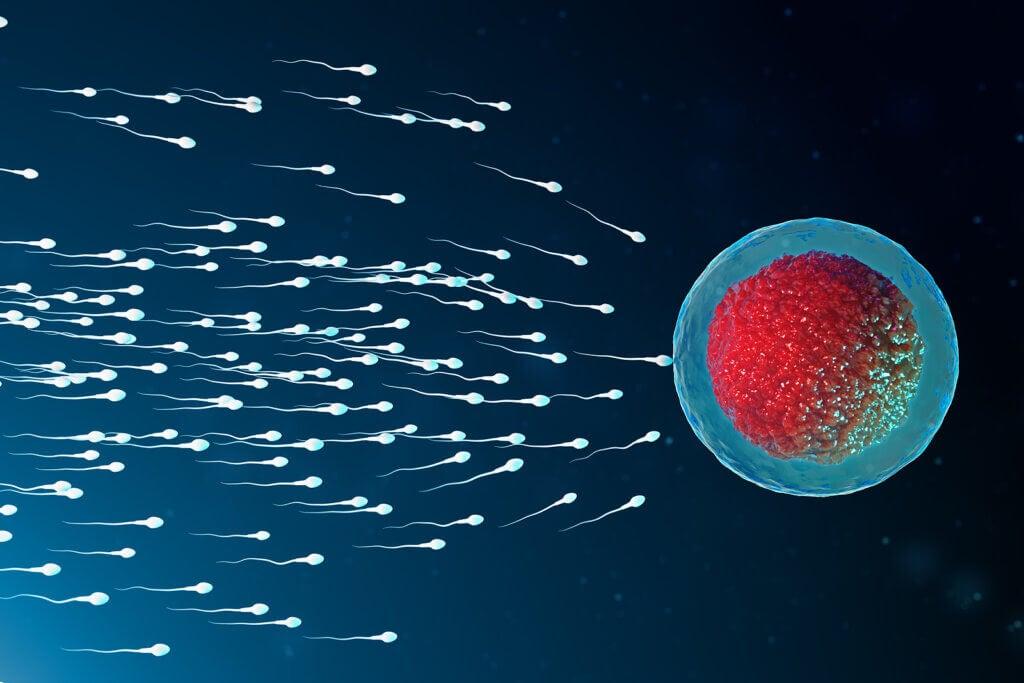 Espermatozoides fecundando.