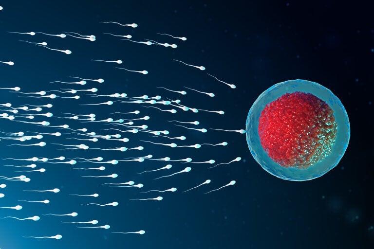 ¿Cómo aumentar la fertilidad masculina?