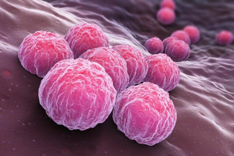 Causas y factores de riesgo de la clamidia