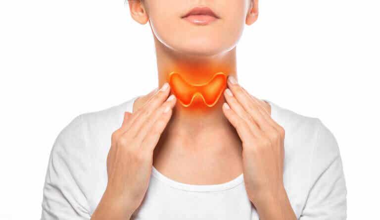¿Cómo funciona la glándula tiroides?