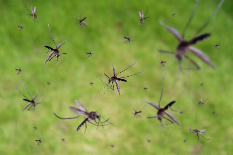 Malaria: síntomas, causas y tratamiento