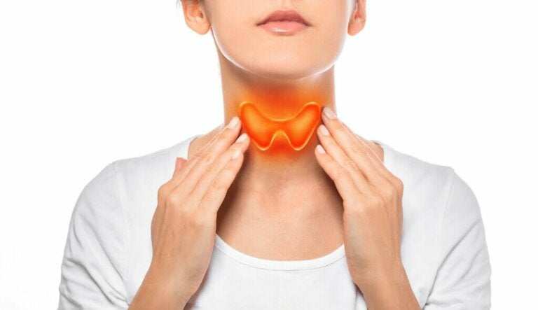 How Does the Thyroid Gland Work?
