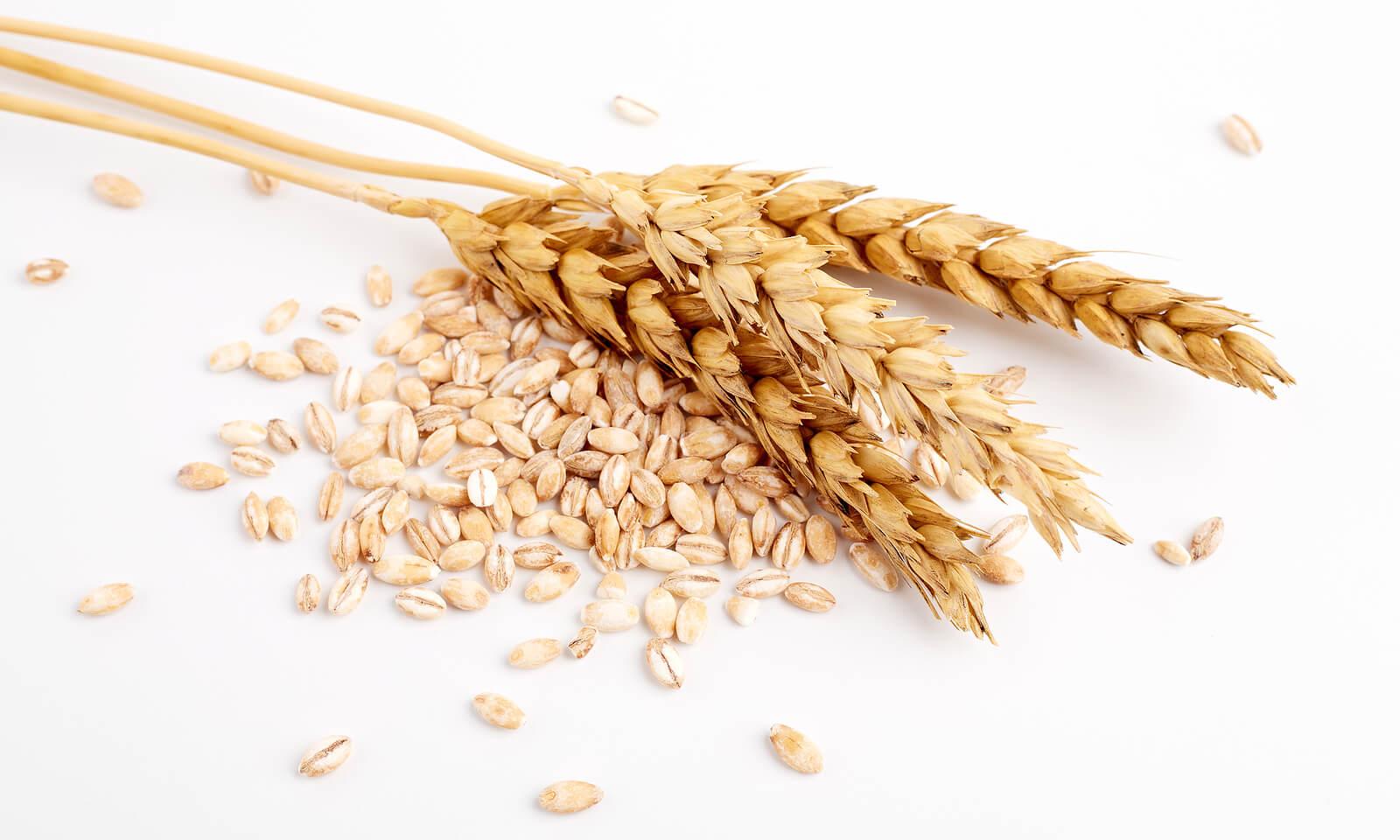 Alergia al gluten: todo lo que debes saber